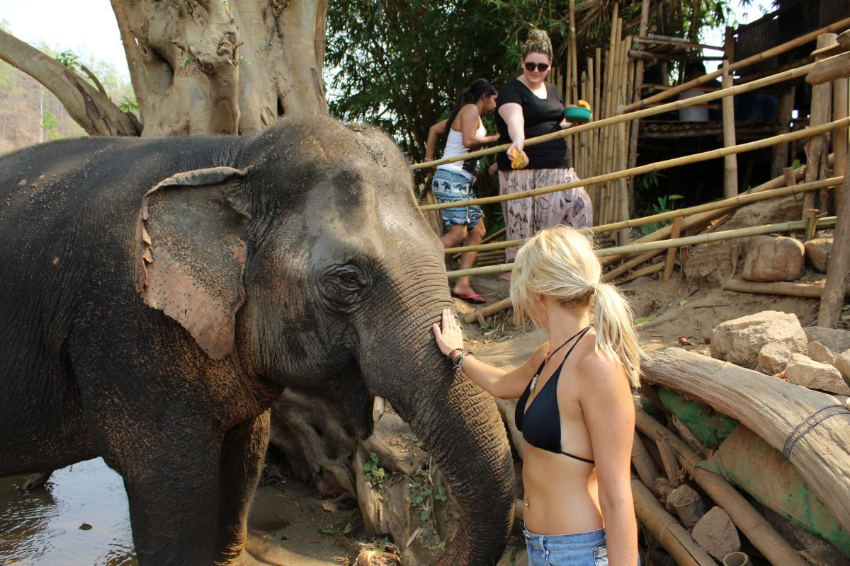 things to do in pai elephants