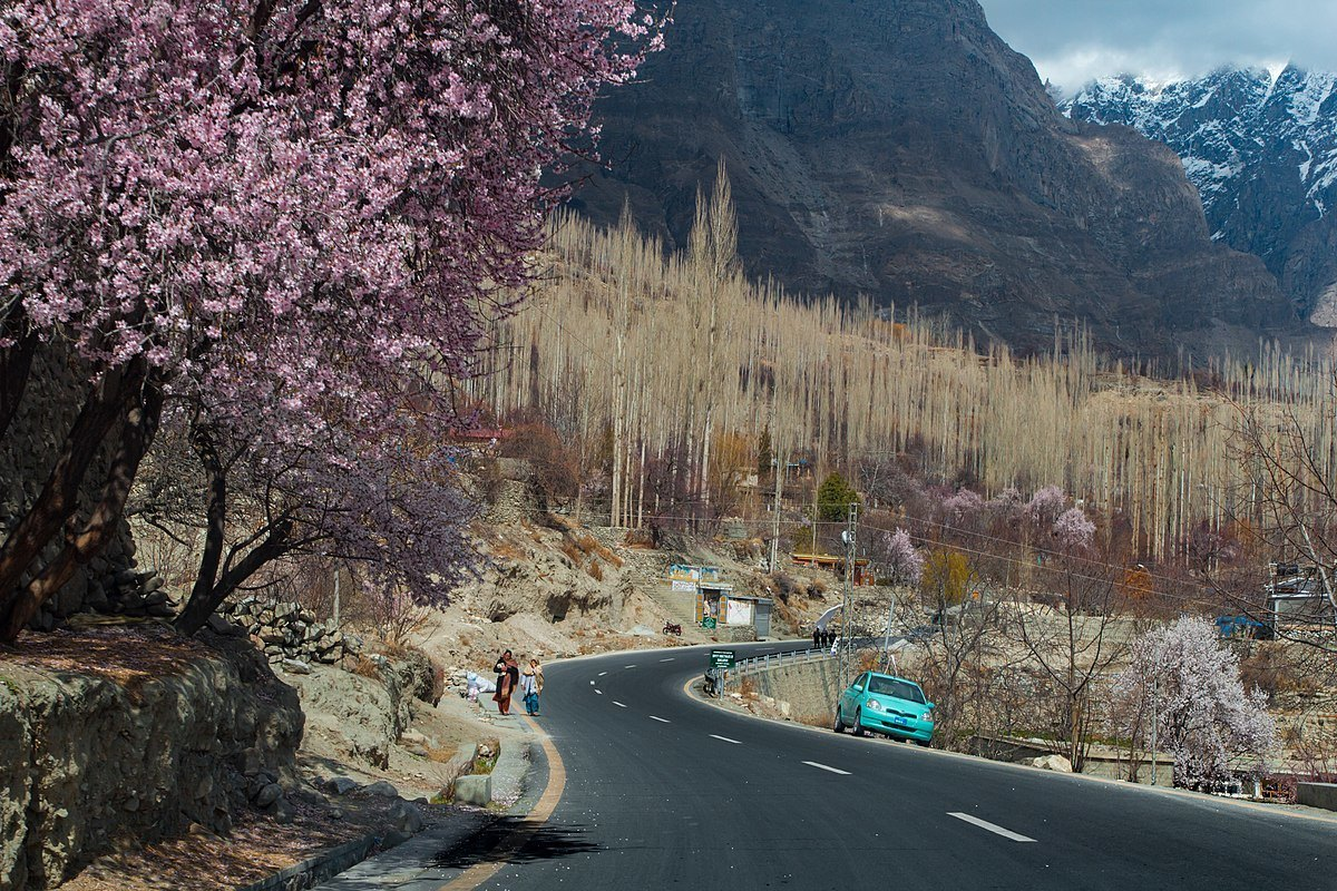 cherry blossom trees in pakistan