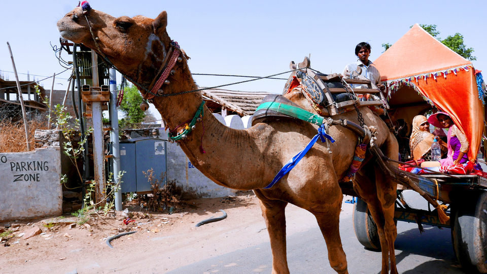 From Jaipur: Pushkar Self-Guided Day Trip