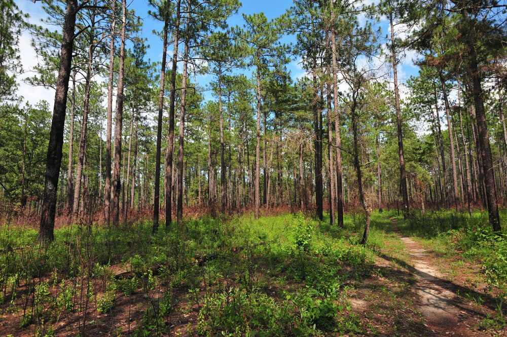 Tuskegee National Forest